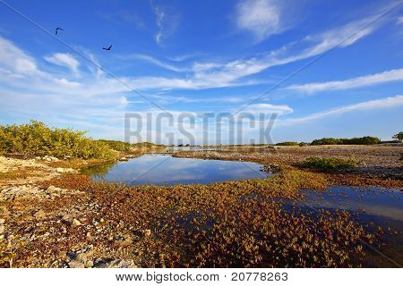 Bonaire Saltlake