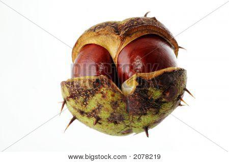 Bronze Chestnut