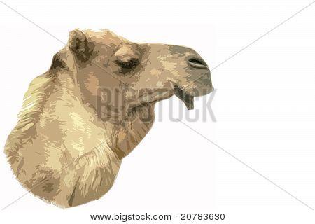 Camel Cutout