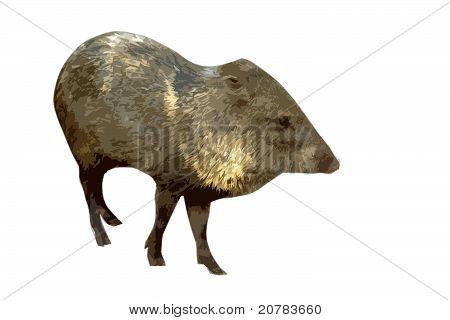 Wild Pig Cutout