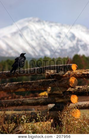 Raven On Fence With Mountains In Background