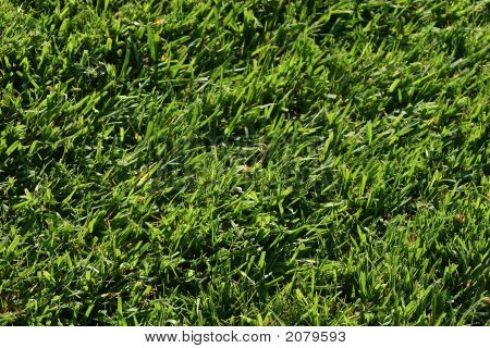 Patch Of Green Grass