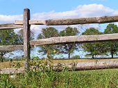 stock photo of split rail fence  - Looking through a split rail fence at the tree lined driveway of a small rural farm - JPG