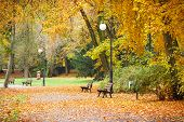 View On Trail Or Footpath With Orange And Yellow Leaves In Autumnal Park poster