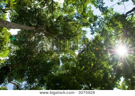 Sun Beams At The Forest