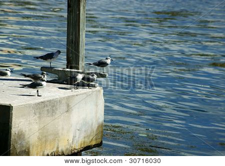 Seagulls on a Dock