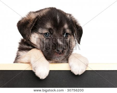 Cute puppy of 1,5 months old with a blackboard over white background