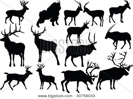 illustration with horned animal silhouettes isolated on white background