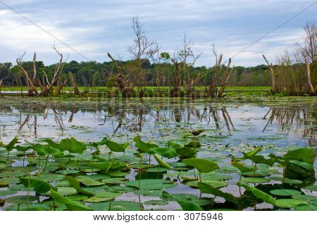 40 Acre Lake At Brazos Bend