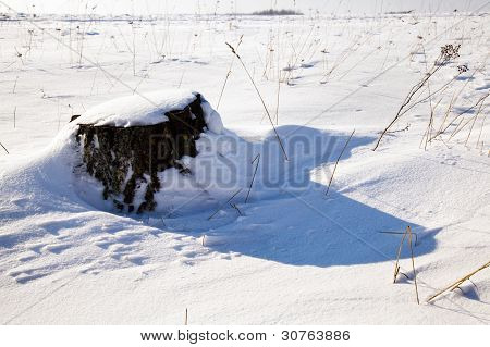 cut tree (winter)