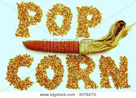 Corns Of Maize