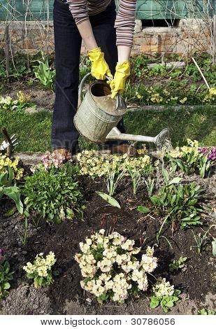 Woman Is Watering Plants In The Garden