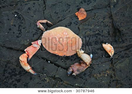 Hacked red crab.