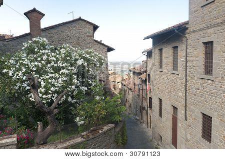 Cortona (arezzo)
