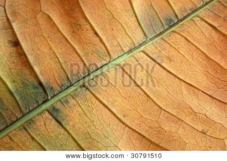 Structure Of The Dry Leaf