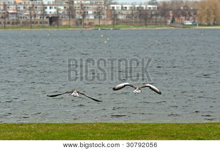 Birds flying over a lake in a city