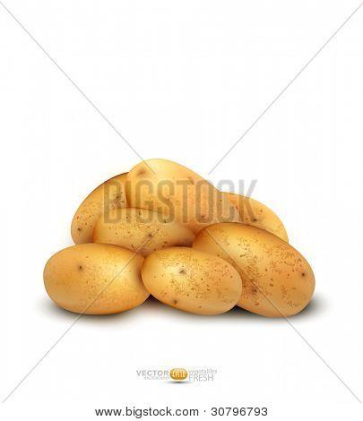 vetor de tubérculos de batata isolado em um fundo branco