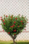 Green Tree In The Shape Of A Heart. Shorn Bush With Red Flowers In The Shape Of A Heart In The Stree poster