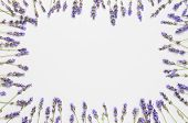 Flowers Composition. Frame Of Fresh Flowers Of Purple Lavender On Light Gray Background. Flat Lay To poster