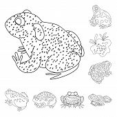 Isolated Object Of Amphibian And Animal Sign. Collection Of Amphibian And Nature Stock Vector Illust poster