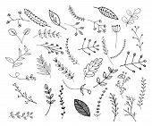 Hand Drawn Leaves And Branches, Floral Elements, Botanical Illustrations And Vectors poster