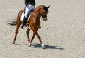 Dressage Horse And Rider In Black Uniform. Beautiful Horse Portrait During Equestrian Sport Competit poster