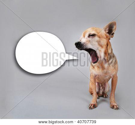 a tiny chihuahua talking
