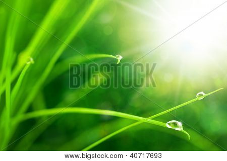 Eco Nature Background with Grass, Sun and Waterdrops /  Defocused Bokeh