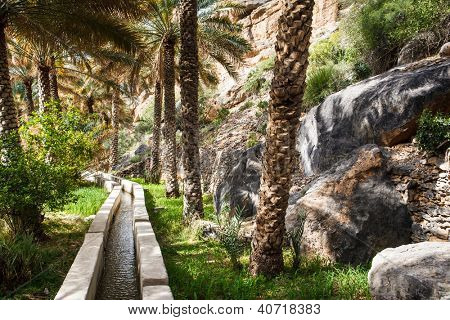 Oasis in the middle of a desert (Oman)