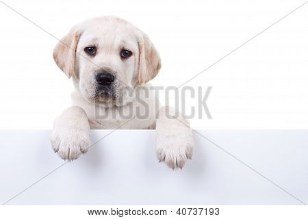 Isolated Puppy Above Banner