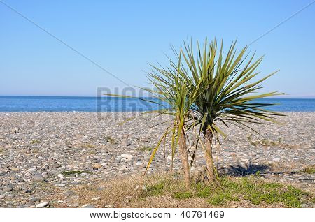 Palm Tree On A Beach Against The Sea