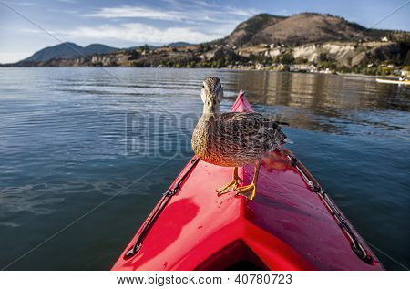 Outdoor photo of a duck standing on the bow of a red kayak on a lake