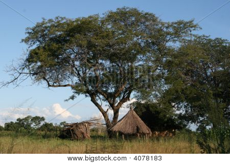 Homestead In Zambia