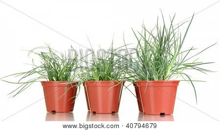 pots with seedling isolated on white