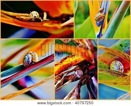 Snail On Strelitzia Reginae