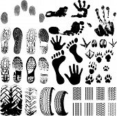 stock photo of animal footprint  - A collection of Vector Fingerprints Footprints and more on white - JPG