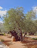 stock photo of gethsemane  - The great city of Jerusalem - JPG