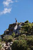 Постер, плакат: Коза на горе вблизи Марбелья Андалусия