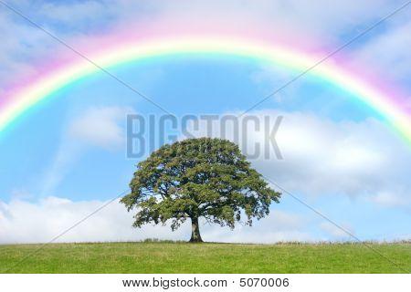 Oak Tree And Rainbow Beauty