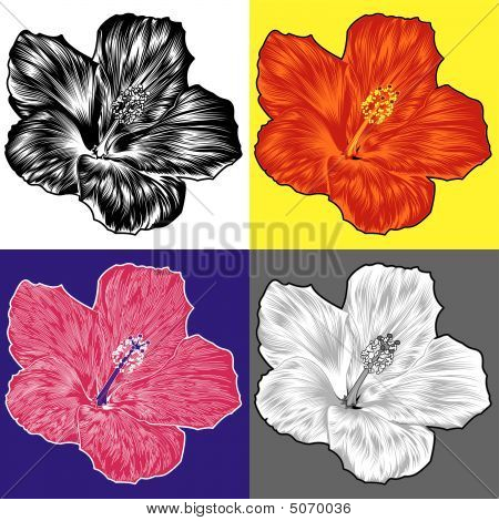 Hibiscus Flower Blossom Variations
