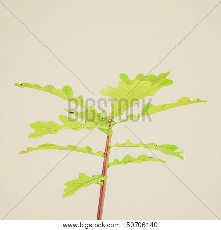 Retro Look Oak Tree