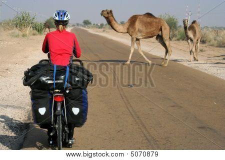 Cycling Through Desert