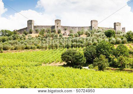 Wineyard In Tuscany