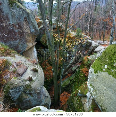 Lofty Stones In Forest