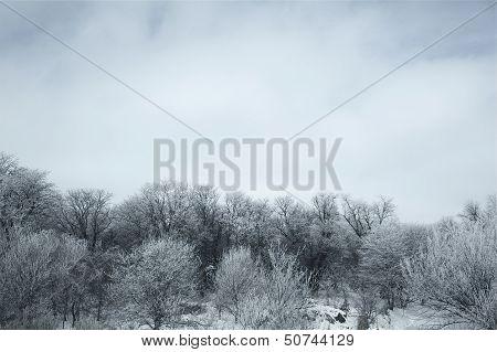 Nebraska Trees