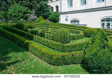 Landscaped Bushes