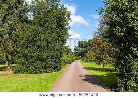 Path Through Beautiful Summer Garden