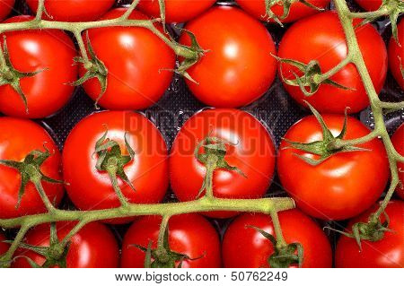 Tomatoes Package
