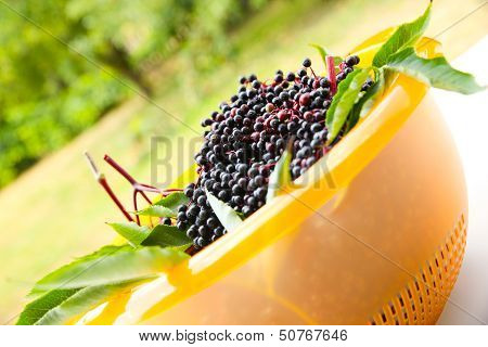 Elder Berries In A Bowl