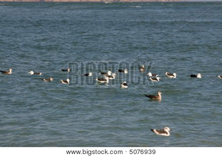 Floating Seagulls